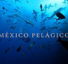 Narrator, Mexico Pelagico Documentary