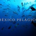 Narrator, Mexico Pelagico Documentary
